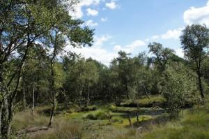 Was wollt Ihr Moor? Im Naturpark Stechlin-Ruppiner Land solltet Ihr von Moor zu Moor wandern. Foto (c) Kinderoutdoor.de