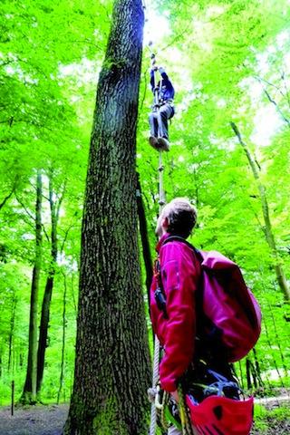 Im Kletterwald Freischütz gehen die Kinder gerne ins grüne.... Foto (c) Freiraum Erlebnis Schwerte GmbH