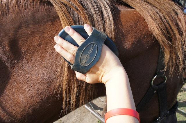 Auch das gehört zum Bauernhof: Pferde striegeln. Foto (c) kinderoutdoor.de