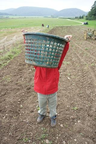 Bauernhof zum Anfassen: Die Kartoffeln kommen nicht aus dem Supermarkt, sondern wachsen auf dem Feld.  Foto (c) kinderoutdoor.de